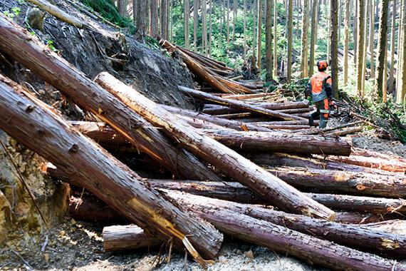 戸川木材について